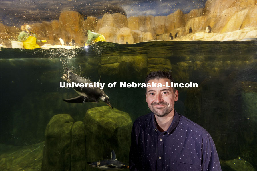 Pictured; Anthony Signore. Jay Storz, Willa Cather Professor of biological sciences, and postdoctoral researcher Anthony Signore are publishing a paper about Emperor Penguins diving abilities. The two are shown with penguins at Henry Doorly Zoo in Omaha. Storz, Signore and their colleagues resurrected two ancient versions of hemoglobin, demonstrating how the blood of penguins evolved to help them better hold their breath while hunting for seafood. March 17, 2021. Photo by Craig Chandler / University Communication.