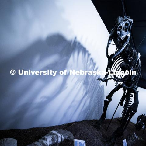 Pictured: Tyrannosaurus Rex skeleton that is on display in the University Museum. April 14, 2020. Photo by Craig Chandler / University Communication.