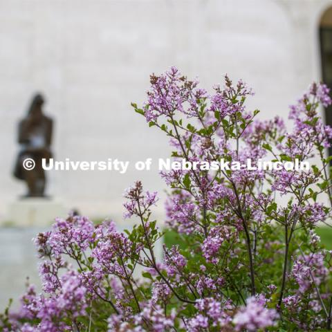 Blooming flowers and bushes on city campus. May 12, 2020. Photo by Craig Chandler / University Communication.