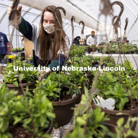 Taylor Cammack moves a finished hanging basket onto the rack so they can be watered during a club work session. Members of the horticulture club prepare plants in the greenhouses on east campus. The plants will be sold at their annual spring sale. April 1, 2021. Photo by Craig Chandler / University Communication.