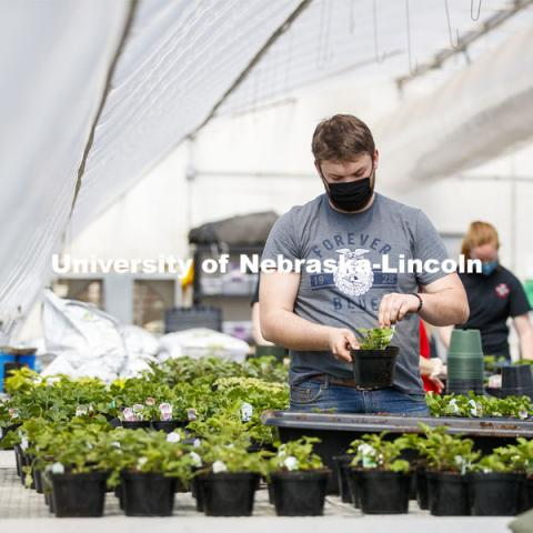 Garrett Kuss adds a tag to a repotted plant. Members of the horticulture club prepare plants in the greenhouses on east campus. The plants will be sold at their annual spring sale. April 1, 2021. Photo by Craig Chandler / University Communication.
