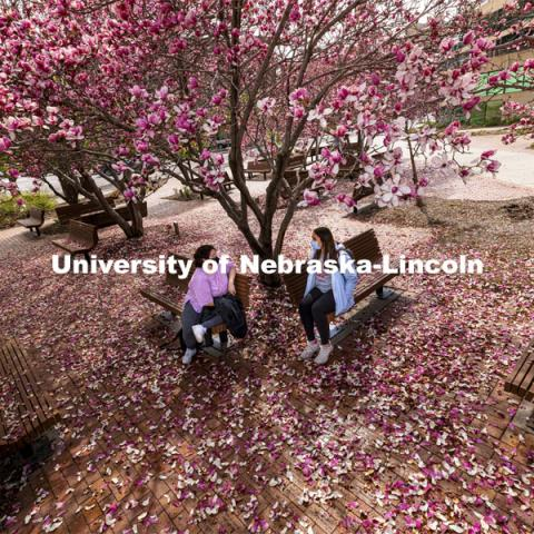 Estrella Avila and Keely Perkins, both second year interior design students, sit under the Saucer Magnolia trees blooming outside of the Lied Center. Spring on City Campus. April 6, 2021. Photo by Craig Chandler / University Communication.