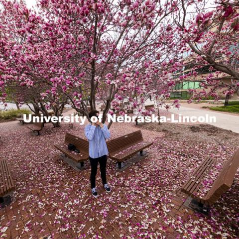 Adison Pace takes photos of the Saucer Magnolia blooms outside of the Lied Center. Spring on City Campus. April 6, 2021. Photo by Craig Chandler / University Communication.