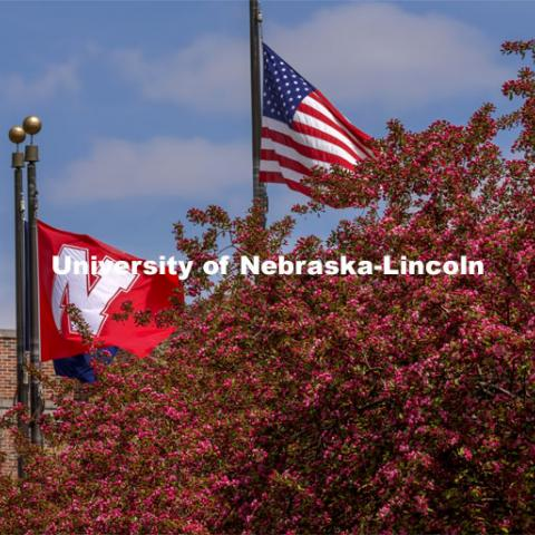 The University of Nebraska Flag and the American flag wave above the flowering trees on City Campus. Spring on City Campus. April 15, 2021. Photo by Craig Chandler / University Communication.
