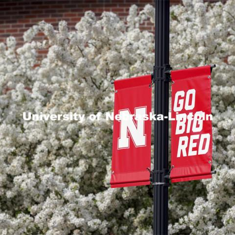 Nebraska N Banners are surrounded by white spring blossoms from a pear tree. Spring on City Campus. April 27, 2021. Photo by Craig Chandler / University Communication.